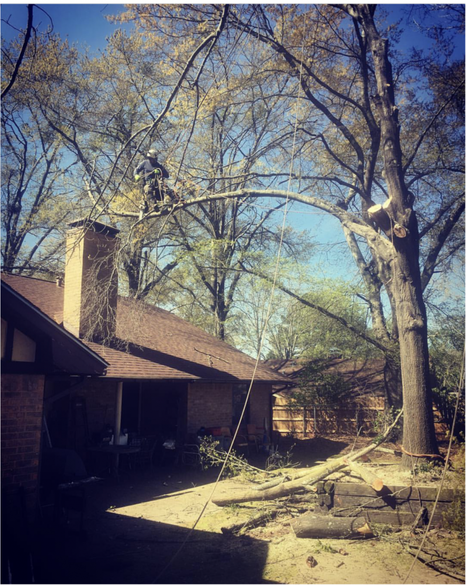 Tree Trimming Services East Texas Lumberjacks Tree
